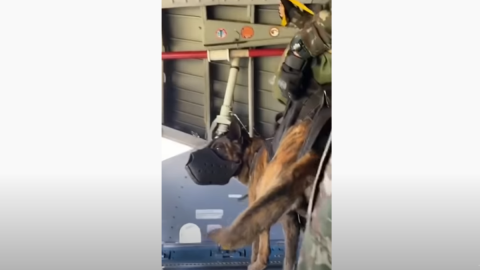 Airborne Dog Jumps From Plane With Special Forces | Frontline Videos